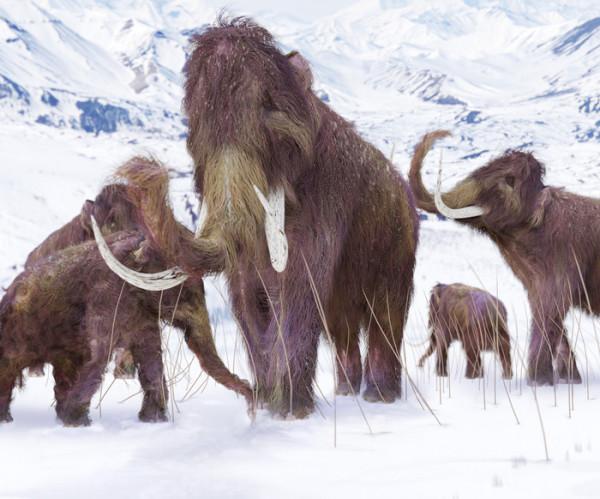 mamuts.reviven
